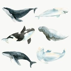 how do html color codes work Whale Painting, Watercolor Whale, Watercolor Animals, Watercolour, Painting Art, Sea Creatures Drawing, Ocean Creatures, Fish Drawings, Animal Drawings