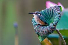 Common kingfisher by Jon Chua on 500px