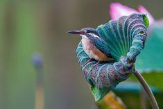 Common kingfisher by Jon Chua on 500px