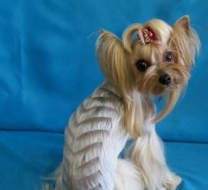 Résultat d'images pour Best Female Yorkie Haircuts Yorkie Cuts, Yorkie Hairstyles, Yorkie Puppy, Silky Hair, Yorkshire Terrier, Hair Cuts, Puppies, Female, Pets