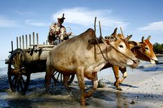 Ngapali Beach, Myanmar. #myanmar