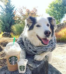 Starbucks Gift Cards Freehere is a brand new website which will give you the opportunity to get Gift Cards. By having a Gift Card you will be given the opportunity to purchase games and other apps from online stores. Starbucks Code, Get Gift Cards, Starbucks Gift Card, Gift Card Generator