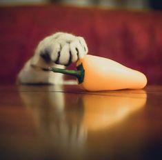 Che si tratti di un pesce appena pescato, di una fetta di pizza o di pane e marmellata poco importa, l'importate per il gatto è l'agguato al cibo. L'istinto di fare propro quel pezzo di salame lasciato incustodito in pratica. Questa raccolta scatti però racconta di quando i nostri amic
