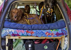 Tips for Road Tripping With Fido - In the past year, I have driven more than 20,000 miles through 36 states with my two dogs, sleeping in the car with them along the way. I can say with certainty that we bonded (sometimes a little too much) and were all better for the experience in the end. #trip #travel