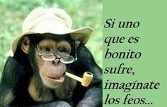 imagenes de monos graciosos con frases fantasticas