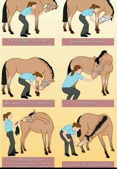winter horse riding in winter training in winter conditioning horse keep horse fit winter horse stretches carrot stretch Horse Information, Horse Exercises, Stretching Exercises, Flexibility Exercises, Neck Stretches, Winter Horse, Horse Riding Tips, Horse Riding Clothes, Trail Riding