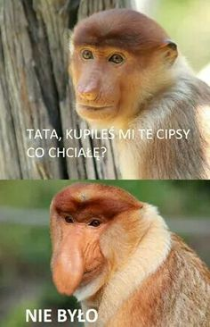 - Funny Monkeys - Funny Monkeys meme - - The post appeared first on Gag Dad.