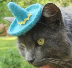 Hats For Cats 4