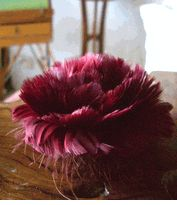 Feather Flowers, an interesting idea, could be combined with real ones to help cut down the costs of flowers.