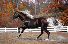 Most Beautiful Horses in the World Most Beautiful Horses, All The Pretty Horses, Beautiful Creatures, Animals Beautiful, Zebras, Majestic Horse, Unusual Animals, Horse World, Tier Fotos