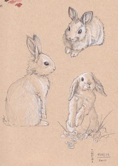 Marvelous Drawing Animals In The Zoo Ideas. Inconceivable Drawing Animals In The Zoo Ideas. Animal Sketches, Animal Drawings, Art Sketches, Art Drawings, Bunny Sketches, Rabbit Drawing, Rabbit Art, Bunny Rabbit, Art And Illustration