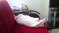 Cat refuses to wake up