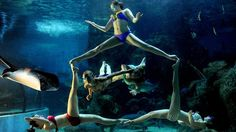 Synchronised swimmers perform an underwater ballet at the Zuohai Aquarium in Fuzhou, China. (Photo: HAP/Quirky China News/Rex Features)