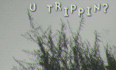 #glitch #trip #TRIPPIN #TRIPPING #glitch #photography #black #u #high #art #leaves #picture #deep
