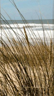 beachcomber: taking a break