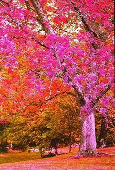Pink tree in the autumn