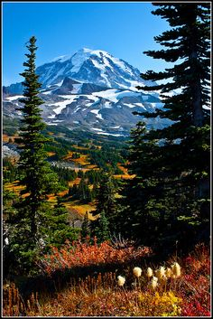 ✯ Magnificient View - Mount Rainier National Park