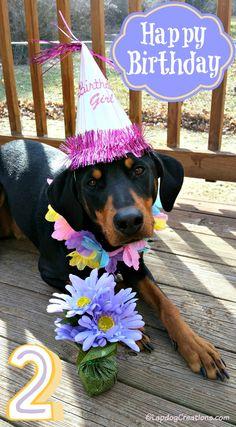 Look Who's 2 - Happy Birthday Penny! Dog Mom | Dog Birthday | Dog Products | Life With Dogs | Rescue Dog | Doberman | Birthday