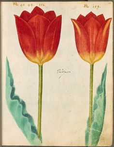 Hortulus Monheimensis 00047 by peacay, via Flickr