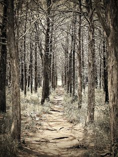 Parallel forest at Wichita Mts Wildlife Refuge