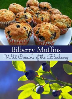 Recipe for wild blueberry muffins from Lovely Greens. Use ordinary blueberries or wild foraged Bilberries.