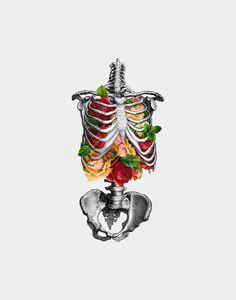Creative Anatomy, Love, Creativity, Illustration, and Skeleton image ideas & inspiration on Designspiration Art And Illustration, Botanical Illustration, Medical Illustration, Arte Com Grey's Anatomy, Anatomy Art, Anatomy Bones, Gcse Art, Art Plastique, Art Inspo