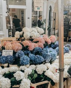 Nothing like walking the Columbia Road Flower Market! My Flower, Beautiful Flowers, Flower Road, Cactus Flower, Exotic Flowers, Flores Diy, Columbia Road Flower Market, Flower Aesthetic, Free Things To Do