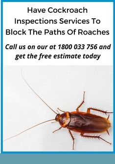 Cockroaches can gain entry to a building in many ways. They are most frequently found in the plant's service areas, including daily inspections by a pest control specialist for each plant to avoid problems by mitigating food, moisture, and harboring resources. #pestcontrolservice #termitecontrol #pestmanagement #cockroach Termite Control, Pest Management, Pest Control Services, Roaches, Brisbane, Gain, Paths, Moisturizer, Plant