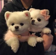 Image uploaded by Find images and videos about animals, dogs and pets on We Heart It - the app to get lost in what you love. Super Cute Animals, Cute Baby Animals, Animals And Pets, Funny Animals, Cutest Animals, Tiny Puppies, Cute Puppies, Cute Dogs, Cute Babies