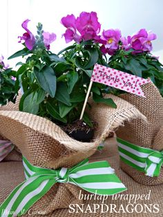 burlap wrapped snapdragons