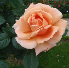Les Jardins de Bagatelle, Paris with over 700 varieties of roses