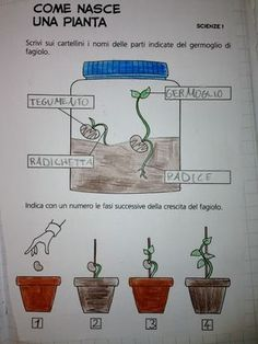Learning Italian Through Vocabulary Italian Grammar, Italian Vocabulary, Italian Phrases, Italian Language School, How To Speak Italian, Affirmations For Kids, Plant Science, Classroom Language, Learning Italian