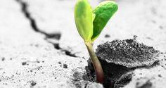 De start-up à PME et ETI : les clés du succès - Les Echos Business