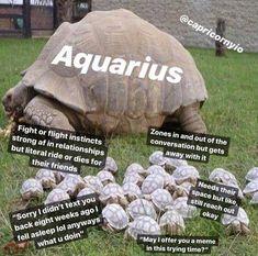 Aquarius Rising, Astrology Aquarius, Aquarius Quotes, Aquarius And Libra, Aquarius Woman, Zodiac Signs Aquarius, Aquarius Facts, Zodiac Star Signs, Zodiac Sign Facts