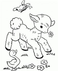 10 Funny Sheep Coloring Pages Your Toddler Will Love: Coloring is a great educational tool; it also helps them develop the tiny muscles in their fingers and wrists.These coloring pages will be fun and exciting as well as challenging for your little one.