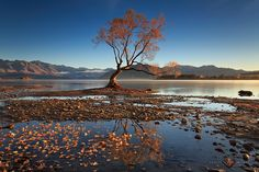 The Lone Willow by Soniel Dalumpines on 500px / #NewZealand