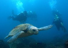 loggerhead turtle pictures   Australia Scuba Gear and Dive Equipment Jetty Dive, NSW Australia ...