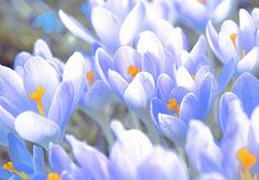Frühlingserwachen Spring is here