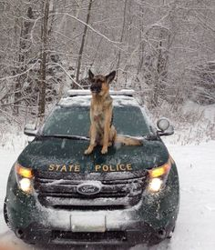 Whatever weather, we have your back. #GSD
