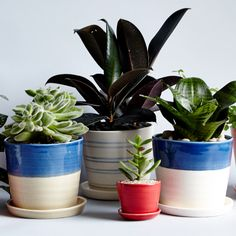 The Sill x Madewell planters