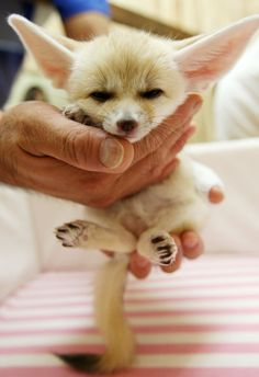 we want a pet fox. this one. preferably.