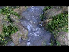 Blender Creek Scene Preview