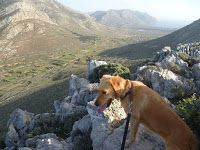 An Octopus in my Ouzo: Dog-decanese