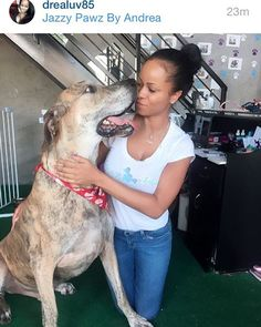 WEBSTA @ jazzypawzbyandrea - GREAT DANE LOVE 💕 #petstylist #dogspa #doglover #whereyourpetistreatedlikefamily #anybreed #anysize #kindawesome