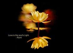 Love is the Soul's Light. ~Mevlana Rumi~ http://rumimasnavi.blogspot.com/2014/08/love-is-souls-light.html