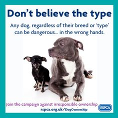 BSL quotes   Does Breed Specific Legislation work?