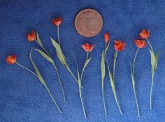 MiniMumLoon: Tulpen, orchideeën en kleine koffieboeketjes / Tulips, orchids and small coffee cup bouquets