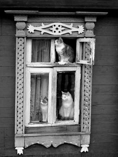CATS CATS CATS IN THE WINDOW