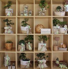 Bombonvivà   Bomboniere bonsai, piantine, candele, bomboniere particolari, bomboniere originali, bomboniere enogastrononiche, distillati, bomboniere food   Collezione Bombonvivà