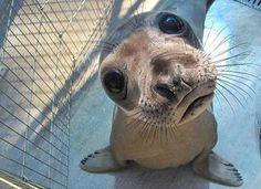 can i go the pool? pleeeeezzzz????